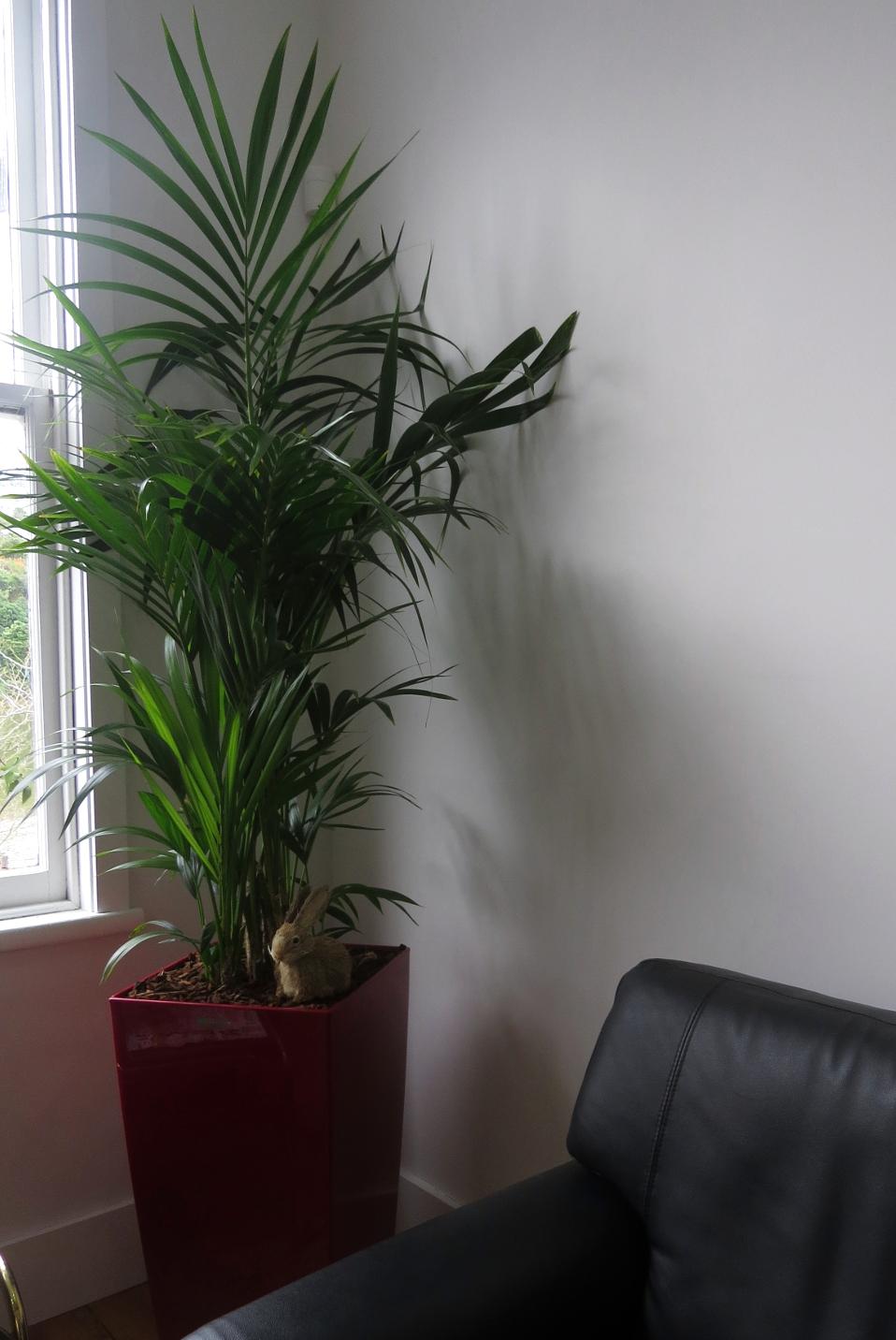 Indoor Plants For Hire
